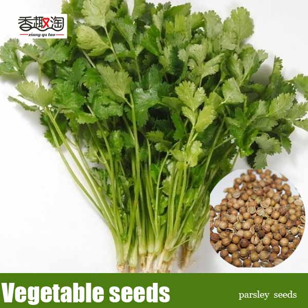 how to use parsley seeds