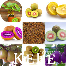 Loss Promotion!100 PCS/pack Mini Actinidia Small Potted Plant Seeds of Fruit Trees Beautiful Bonsai Kiwi Seeds,#EF4OLM