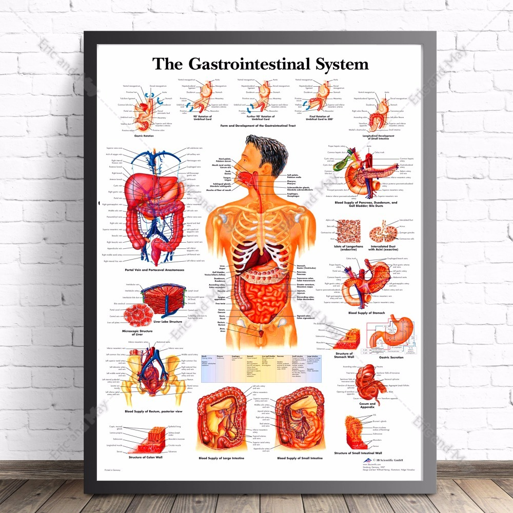 Human Body Anatomy Canvas Art Print Painting Poster Wall Pictures ...