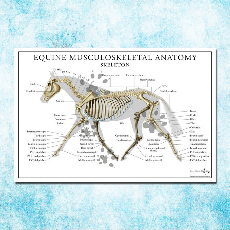 Anatomy Muscles System Art Silk Poster 13x20 32x48 inch Body Map Pictures for Medical Education 005
