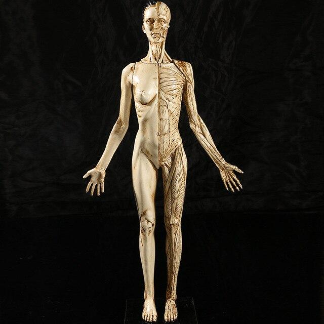 Comprar ahora Mujer femenina 43x9 cm precisa 1: 1 artes de la resina ...