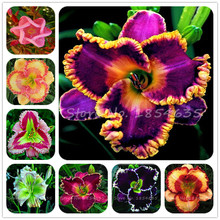 30 Pcs Hybrid Mix Daylily Flowers Seed Rare Colour Hybrid Hemerocallis Seeds New Day Lily Seed Packet Garden Decoration Hot Sale