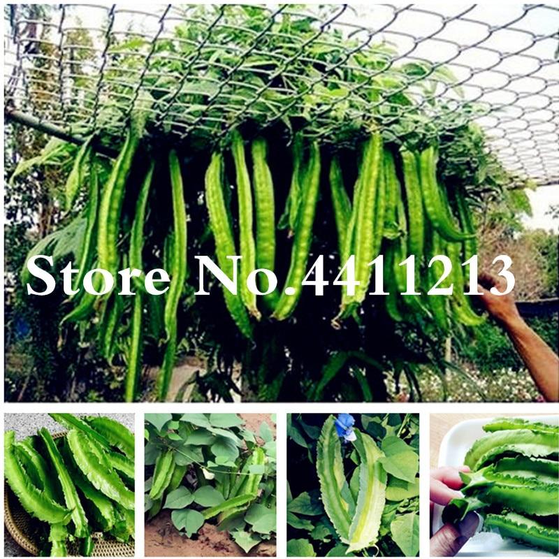 20 Rare Psophocarpus Tetragonolobus Bonsai Fresh Asian Winged Bean Plant High Germination Easy-growing Vegetable