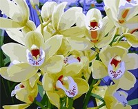 Mahuaf-x550 sơn by số phong lan trắng craft flower hình ảnh màu by số dầu tự làm sơn trên canvas khung 40x50 cm
