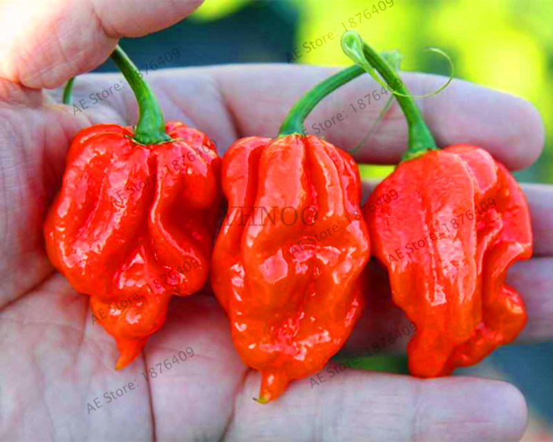 200Pcs Carolina Reaper Seeds Rare Red Hot Chili Peppers Extremely Hot Pepper