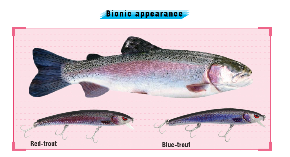 Red-trout_19