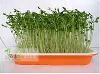 Janpan free shipping,4pcs/lot,SEEDING TRAY/Double layer sprouts plate&seedling tray/Planting sprouts dish/,Nursery Trays & Lids