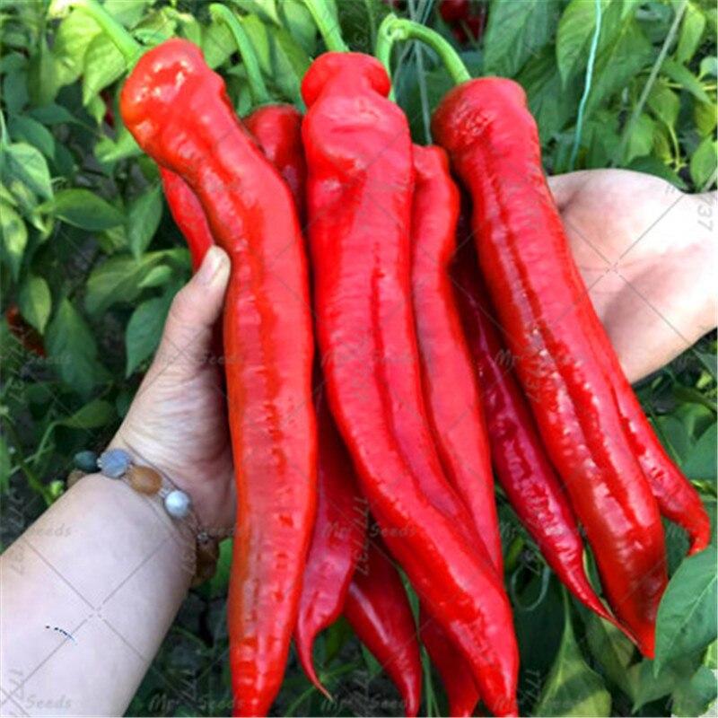 20 Seeds Suffolk Herbs Organic Pepper Hungarian Wax