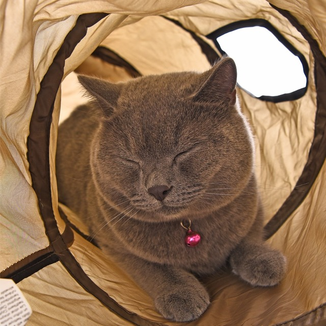 """Drop shipping """"S"""" Cat Toys Tunnel Long 1.2M Lovely Funny Design 2 Windows and 2 Holes Cat Tunnel Toys Kitten Puppy Pet Supplies 4"""