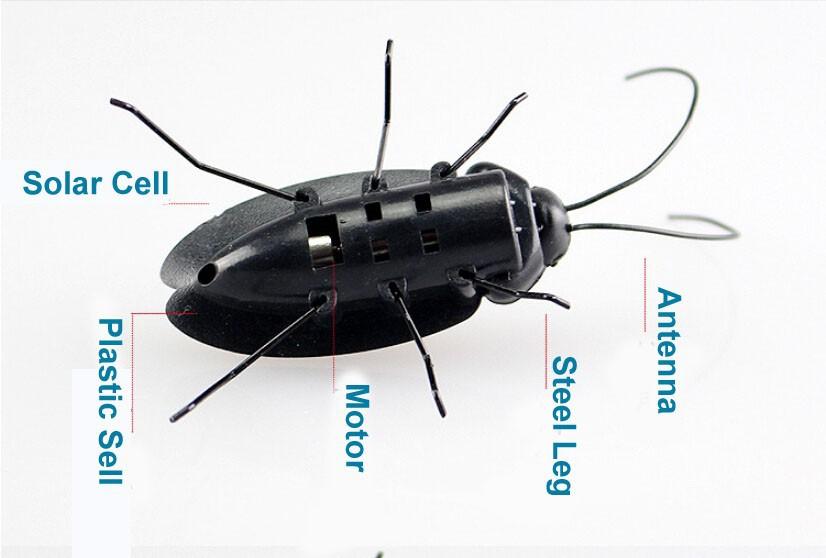 Neljaosaline putukate komplekt