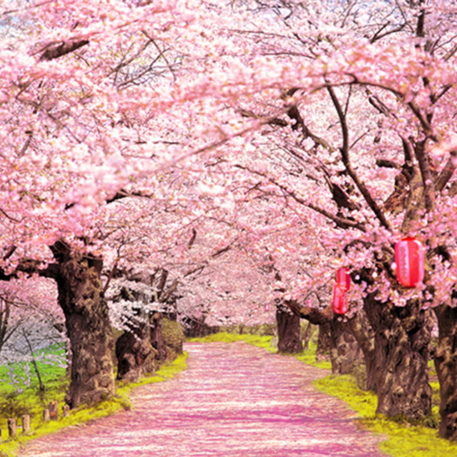 Online shop blush pink flowers old trees beautiful road natural image mightylinksfo