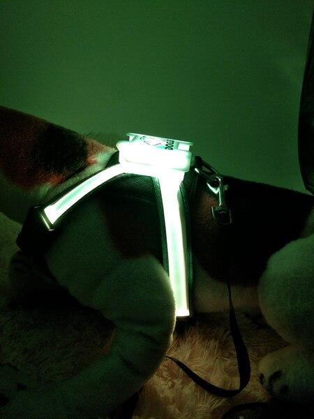 dog harness (12)