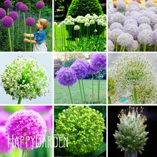 New Seeds 2017!Exotic Onion Seeds Giant Allium Seeds Multicolor Potted Flowers (White Purple Green) 30 Seed / Bag,#PESLPO