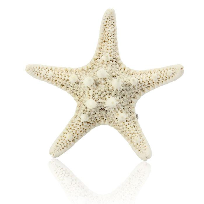 Europe Women Pretty Hair Clip Girls Natural Starfish Star Beige Hair Accessories