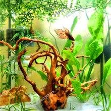 1000 Pcs/bag Fern Moss Live Aquarium Plants Seeds Fish Tank Background Aquatic  Indoor Ornamentals Free Shipping Hot Sale