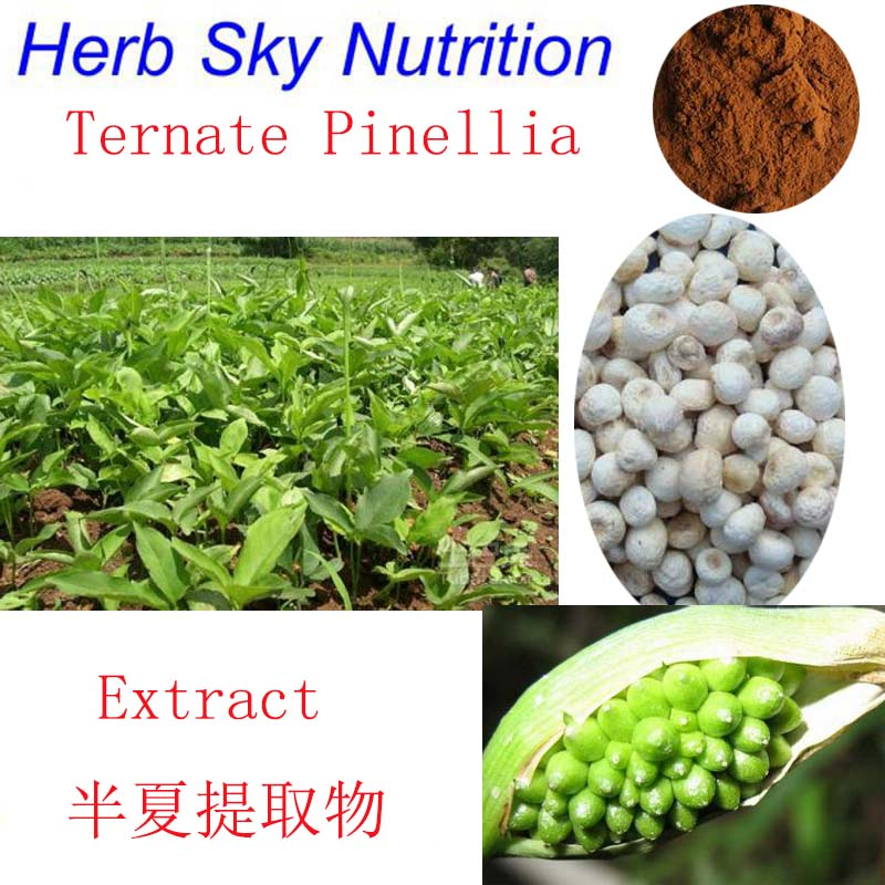 Herb Sky Nutrition 100% Natural green  remove Phlegm stop cough and asthma Pinellia Ternata Extract 10:1 beverages and food additives ternate pinellia extract