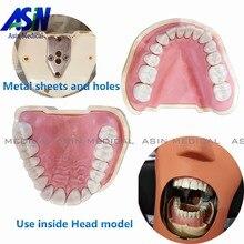 2017 nova Dental Modelo Teeth Removível 28 pc Dentes NISSIN Goma Macia 200 KAVO cabeça modelo Compatível dentista ensino aprendizagem