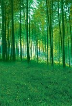 MEHOFOTO Art fabric photography backdrops Green bamboo forest backdrop vinyl photography backgrounds for Photo studio(China)