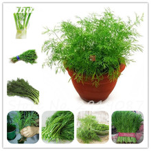 100Pcs Europe Fragrant Bulb Fennel Seeds Organic Vegetable Rich Aroma Cooking Spices Anise Flavor Use In Soups,Salads,Stir-Fries