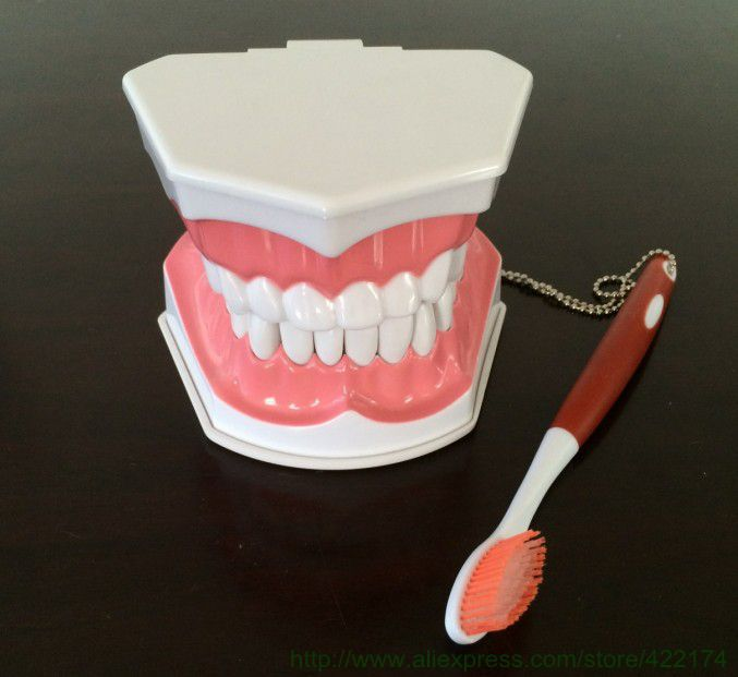 Free shipping dental tooth model dentist demonstration instrument teeth removable odontologia dentistry dentista tool products soarday children primary teeth alternating transparent model dental root clearly displayed dentist patient communication