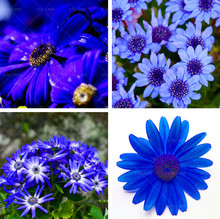 Buy   ic ornamental flowers Free Shipping  online