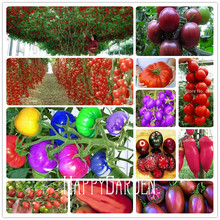 New Seeds 2017! 20 Pieces/Pack Rainbow Tomato seeds, bonsai organic vegetable & fruit seeds,potted plant for home &garden