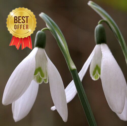 Common Garden Plants common garden plants reviews - online shopping common garden