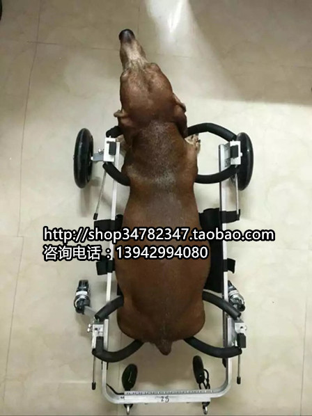Dog font b wheelchair b font Pet font b wheelchair b font  font b disabled