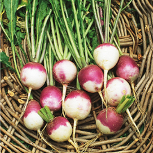 Purple Top White Globe Turnip Seed * 1 Gram 400 Seeds * Brassica rapa * Butter Turnip * Vegetable Seed *