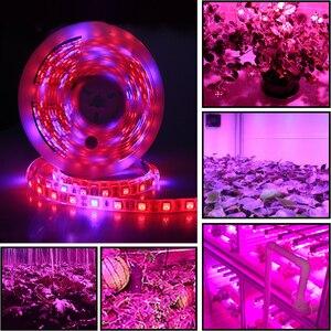 Image 3 - 5 M LED Phyto Lamps 전체 스펙트럼 LED 스트립 빛 300 LED 5050 칩 LED Fitolampy 온실 수경 식물에 대 한 조명을 성장