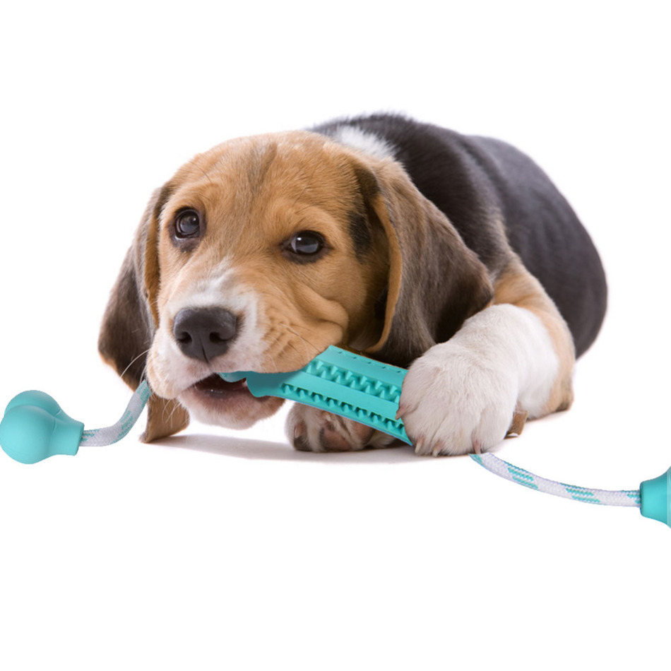 Fun Toy Dogs : Training chewing rubber dog toy