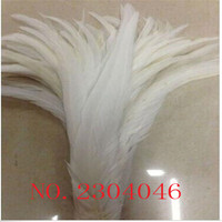 Wholesale 200PCS natural feather bleaching color 30 35CM (12 14 inches) cock feather DIY decorative feather accessories
