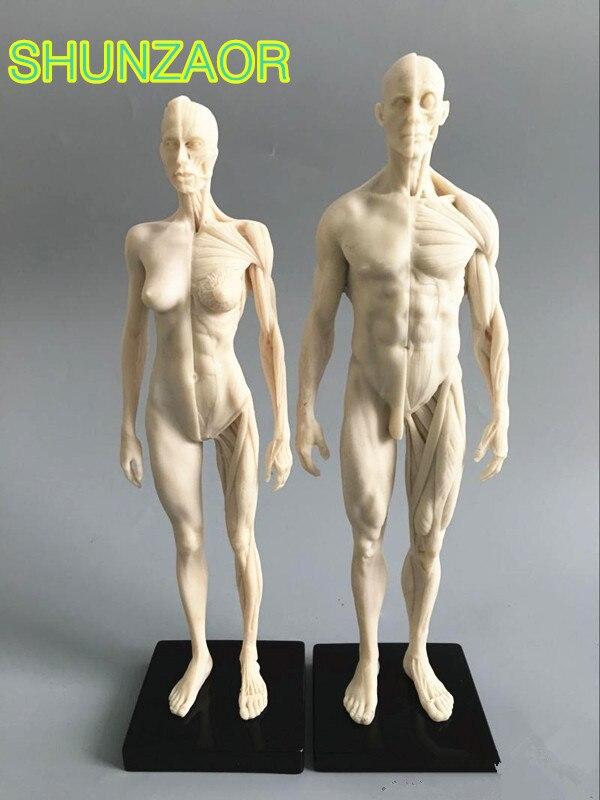 1:6 weiß 30cm Menschlichen anatomie Männlichen & weibliche Flesh Anatomie vergleichs anatomie set dental kamera machen up modell