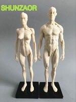 1 6 30cm L Human Anatomy Male Female Flesh Anatomy Comparative Anatomy Set Skull Brain Skeleton