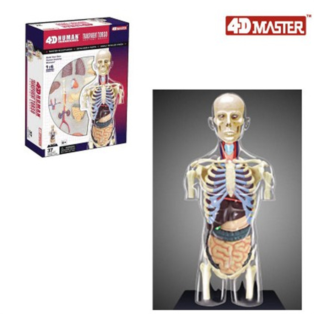 Mini 1:6 Human male assembly model Assembled Human Anatomy Model Gift for Children male pelvic cavity anatomical male reproductive system anatomy medical model male reproduction urinary model modelgasen rzmn022