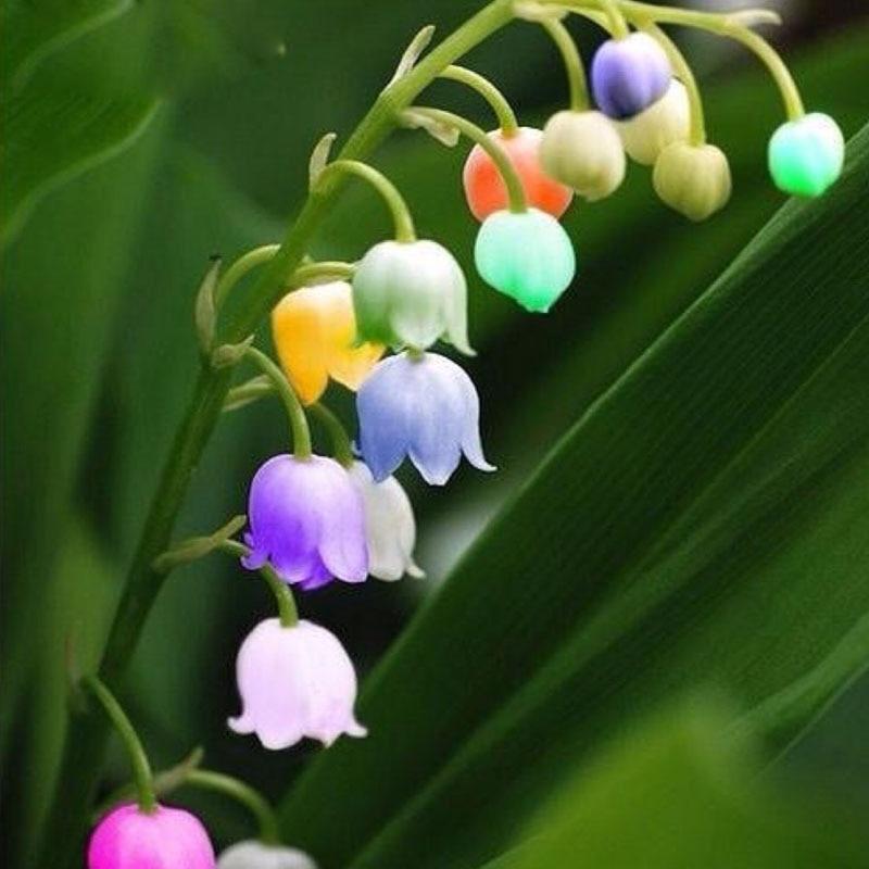 popular precious flowersbuy cheap precious flowers lots from, Beautiful flower