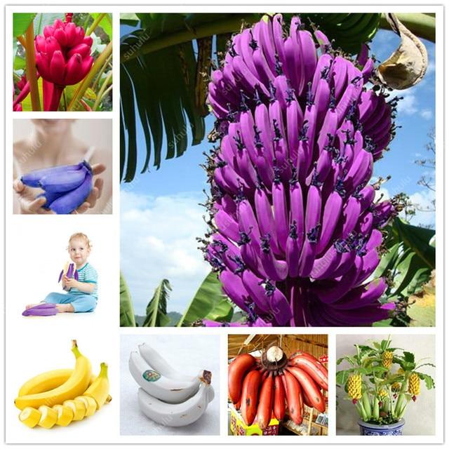 100 шт карликовый банан дерево бонсай фруктовый завод редкий мини-Бонсай открытый многолетние цветущие растения для садовые растения