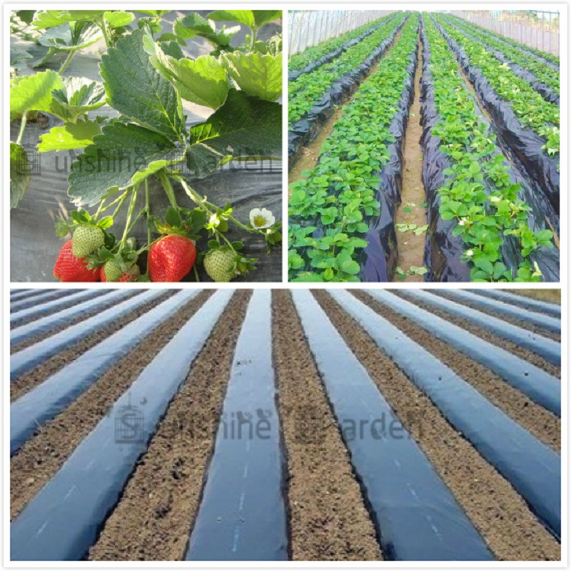 Black Agricultural Shade Film 1x50Meters Strawberry PE Film Garden Flower Greenhouse Plastic Mulch Film 0.008mm Thickness