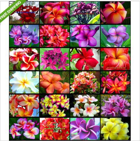 Hawaii Garden Patio Landscape Ideas Style Create Your