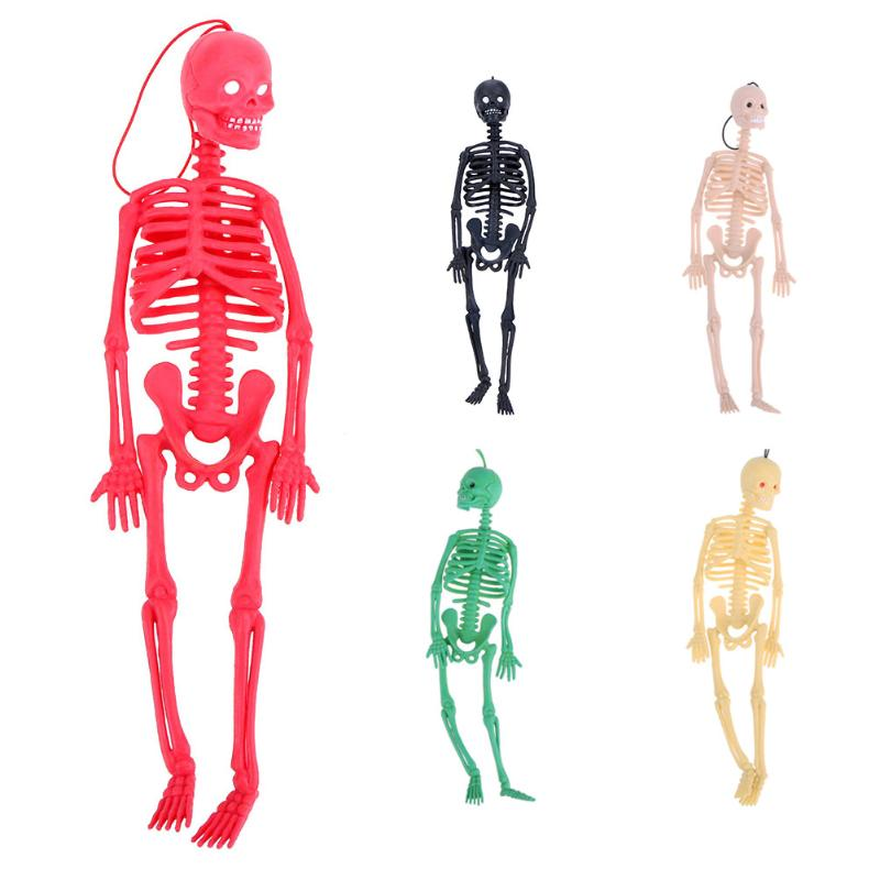 online buy wholesale human skeleton toy from china human skeleton, Skeleton