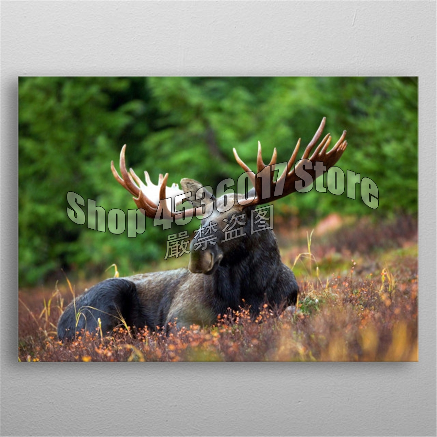 Full 5D DIY Diamond Painting Bull Moose Animals Diamond Embroidery Cross Stitch Diamond Mosaic Home decoration Supplies Posters in Diamond Painting Cross Stitch from Home Garden