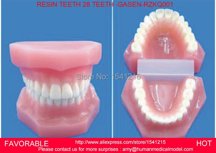 TOOTH DISEASE PATHOLOGICAL ANATOMICAL MODEL,ORAL CAVITY MODEL NATURAL SIZE ORAL DENTAL MODEL RESIN TEETH 28 TEETH-GASEN-RZKQ001 resin oral periodontal disease classification model gingivitis degree chronic periodontitis model