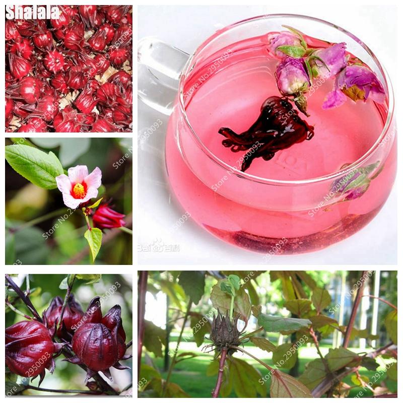 hibiscus fleur de thé-achetez des lots à petit prix