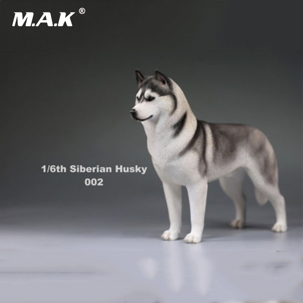 In stock 1/6 Action Figure Accessory Siberian Husky Simulation Animals Sixteenth 002 Dog Model Toys for 12 inches Action Figure цена