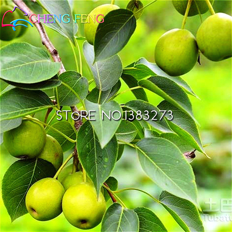 Warehouse produce seeds of trees and bushes, seeds in fruits