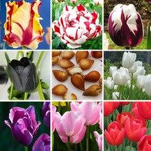 Zlking 1 шт. тюльпан бонсай лампы (не тюльпан), 19 видов цветов доступны тюльпаны различные свежие Семена редких тюльпанов цветок клубнелуковицы посадили