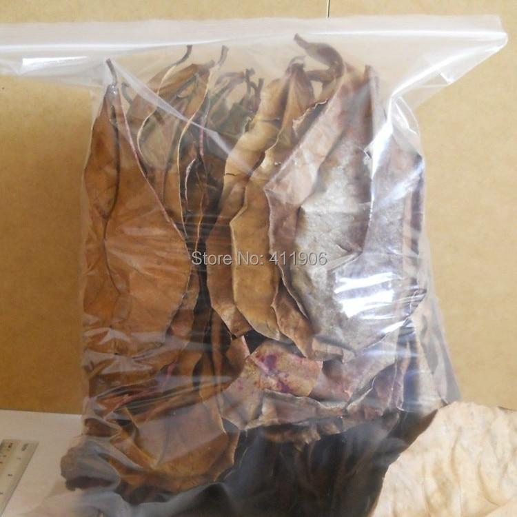 50pcs Grade A Natural Terminalia Catappa Foetida Leaves Island Almond Leaf Fish Cleaning/Treatment Aquarium Tank Free Shipping