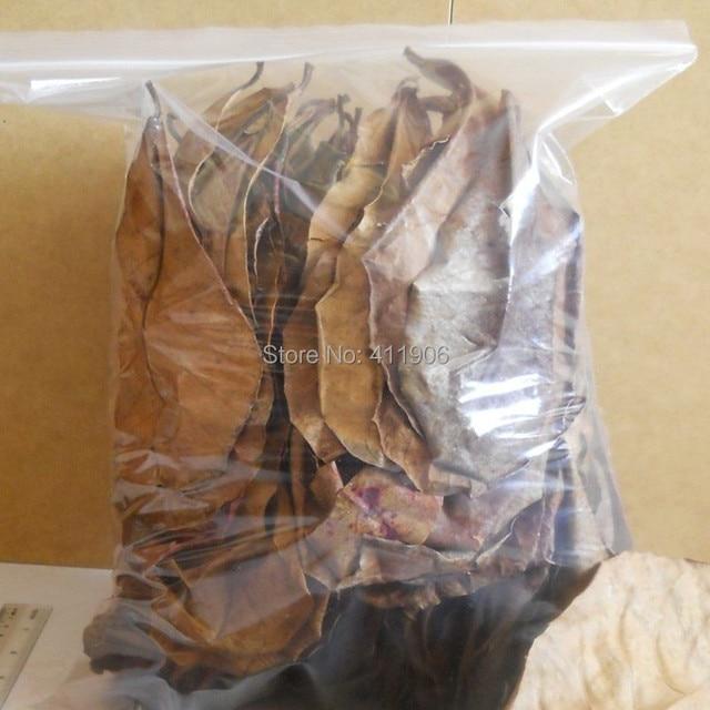 50 piezas grado A Natural Terminalia Catappa Foetida hojas isla almendra hoja pescado limpieza/tratamiento acuario tanque envío gratis