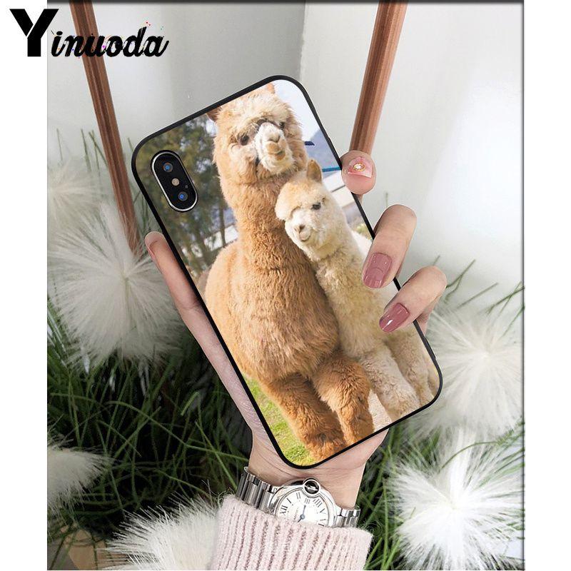 Lama Llama Alpacas Animal