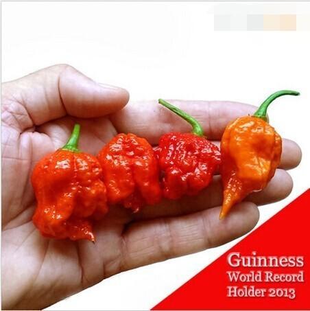 """100 SEEDS-100% Chính Hãng Fresh Hiếm Red """"Carolina Reaper"""" Pepper Hạt (hot chilli) Hạt Giống Rau hữu cơ * Vận Chuyển Miễn Phí"""